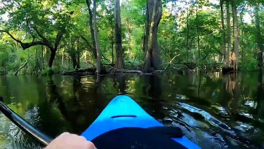 Grosse frayeur pour ce kayakiste qui rencontre un alligator !