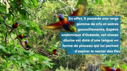 Les plus beaux oiseaux du mondes