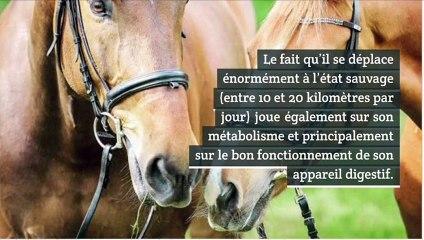 Ce que l'on sait peu sur les chevaux