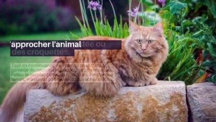 Comment apprivoiser un chat ?