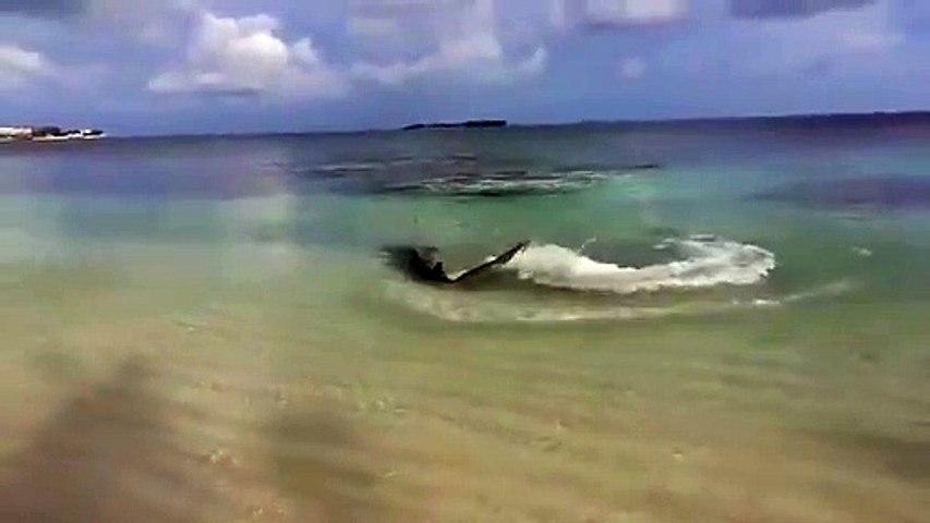 Ce requin vient chasser jusque sur la plage