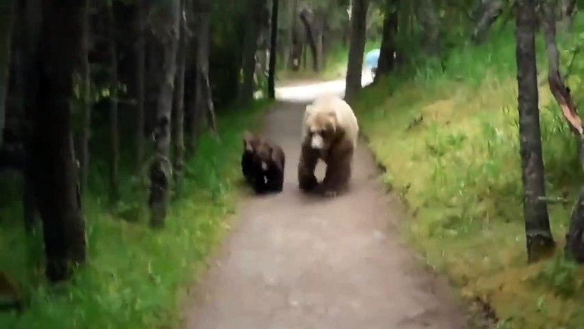 Ces randonneurs tombent sur un ourson et sa maman en alaska