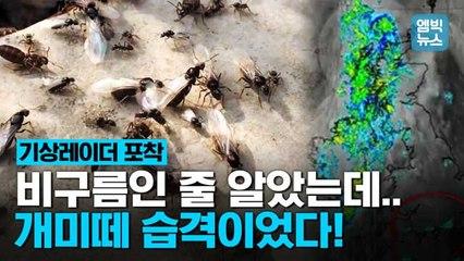 [엠빅뉴스] 날아다니는 개미떼! 영국 상공 80km 뒤덮었다