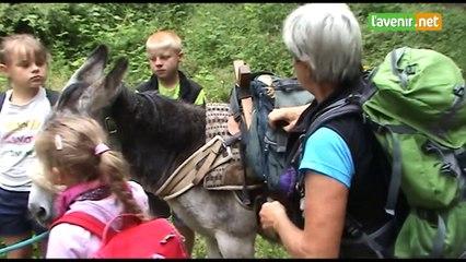 Balades ert randos avec un ou plusieurs ânes au pays Famenne - Ardenne