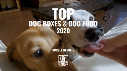 Best Dogfood 2020