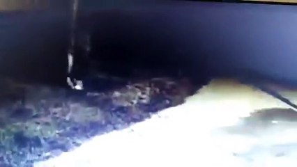 Jubilado mata a ladrón en Quilmes