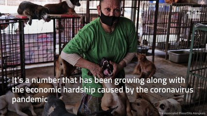 Indonesian dog shelter feels the strain during the COVID-19 pandemic