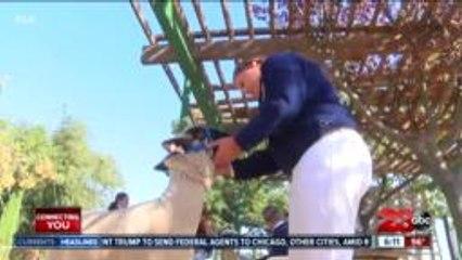 Kern County Fair's livestock show participants prepare animals for virtual video submission