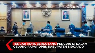 Viral! Anggota DPRD Asyik Goyang Penguin