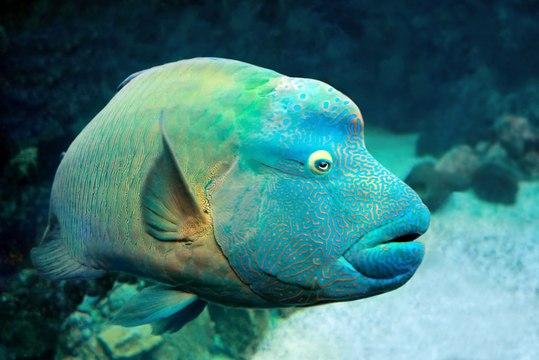 """""""The Great 8"""": à la rencontre de 8 espèces vivant au sein de la Grande Barrière de Corail"""