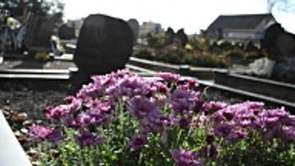 Cimetière : Quelles fleurs choisir pour l'hiver ?