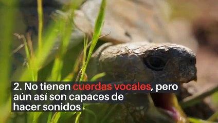 8 datos curiosos sobre las tortugas