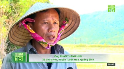 Quảng Bình: Vụ hè - thu mất mùa vì nắng hạn cực điểm | VTC