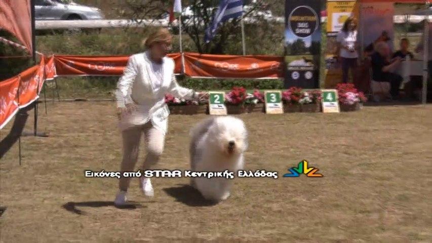 Mountain dog show  2020 στη Καλοσκοπή Φωκίδας