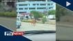 FEATURE: Bakang nagtatakbo sa kalsada sa Iloilo, nag-viral sa social media