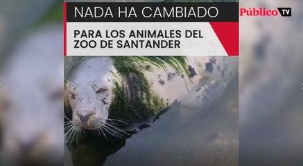 Focas y pingüinos abandonados a su suerte en Santander