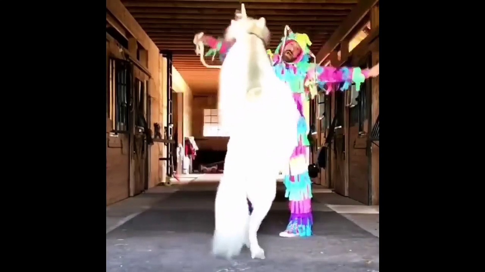 Funny And Cute Horse Videos Compilation Cute Moment Of The Horses Cutest Horse 5 Video Dailymotion
