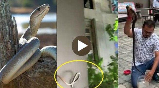 VIDEO: अहमदाबाद के स्कूल में 6 फुट लंबे फुर्तीले सांप से मचा कोहराम, कैसे हुआ काबू ?