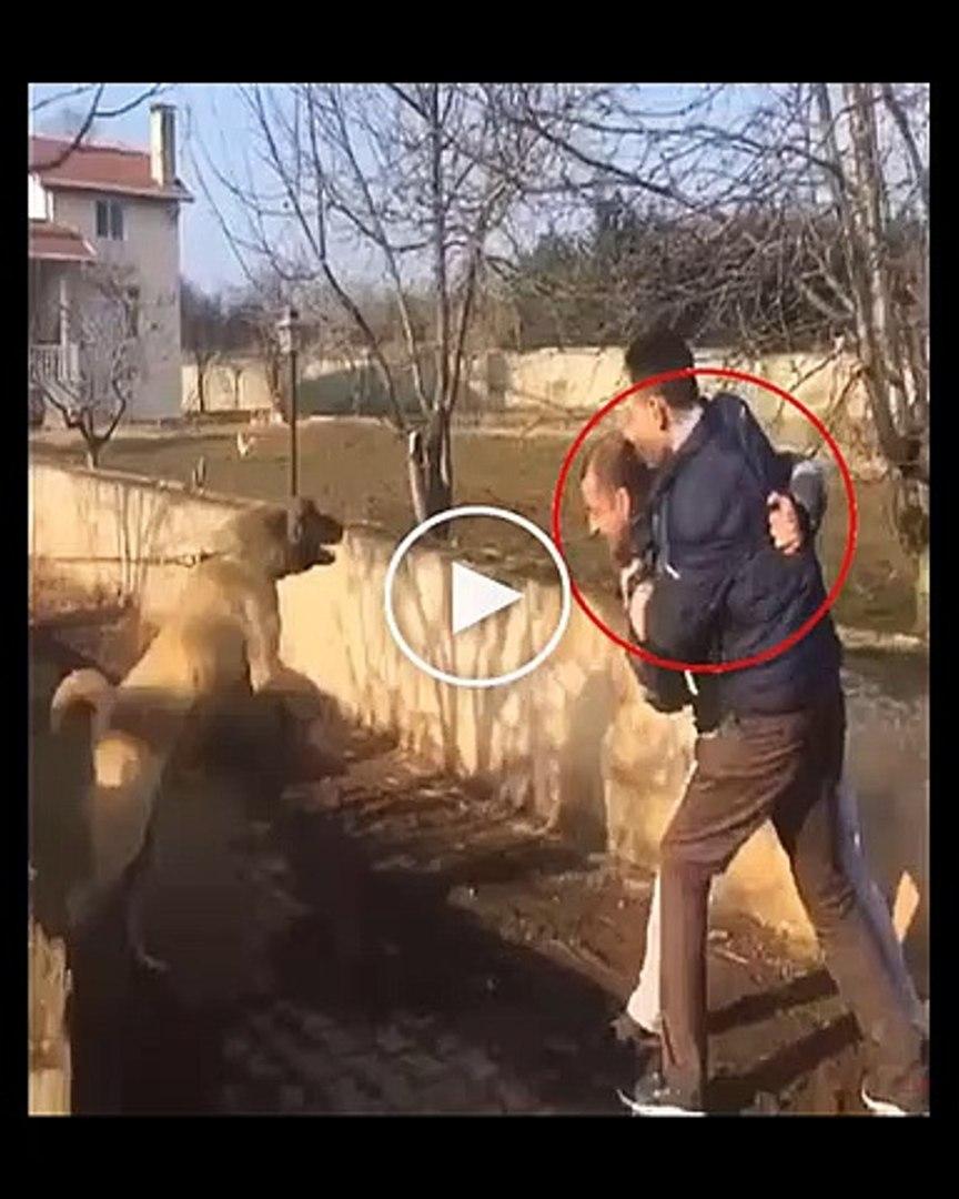 SiVAS KANGAL KOPEGiNiN SAHiBiNİ KORUMASI - ANATOLiAN SHEPHERD KANGAL DOG OWNER PROTECTiON