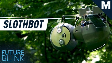 Georgia Tech built a 'slothbot' that slowly climbs through trees — Strictly Robots