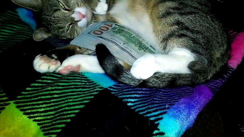 Ce chat aime trop l'argent... Lâche les billets!!!!