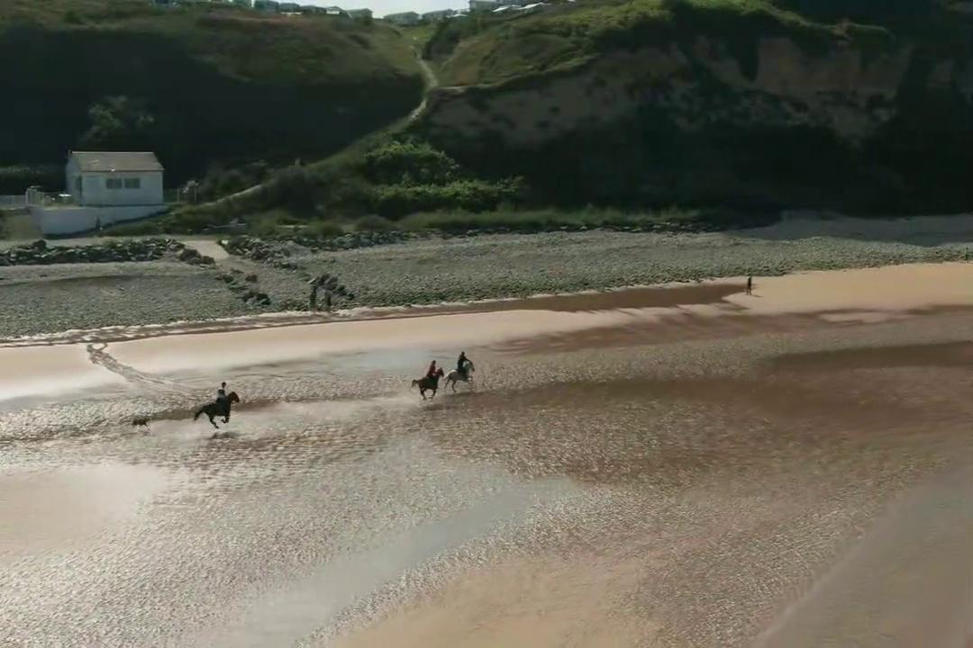 Horse racing| Horse race| Horse| horse racing| horse race| horses