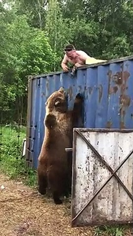 Ce russe joue avec un ours sauvage... pas si sauvage