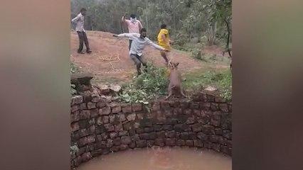 Rettung mit Hindernissen: Wildschwein greift Helfer an