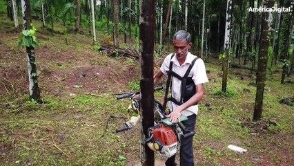 Un campesino de la India inventó una 'moto' para subir palmeras en segundos