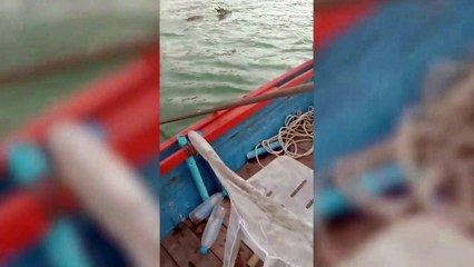 Stranded deer rescued from the sea