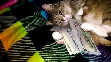 Ce chat aime beaucoup trop l'argent