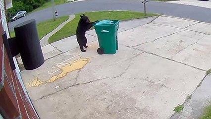 Hilarant : quand un ours rentre les poubelles à ta place