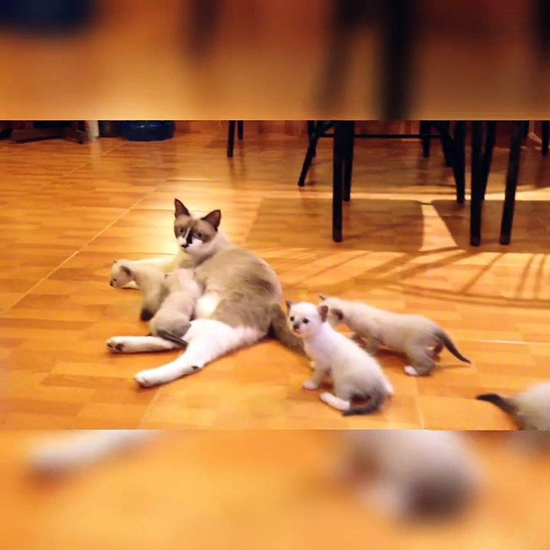 Cute kittens video