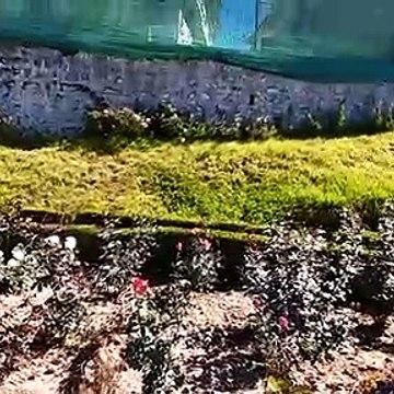 Ooty rose garden video 3