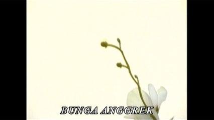 Hendri Rotinsulu - Bunga Anggrek