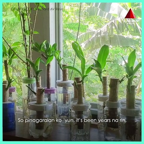 A Platito Shares The Benefits Of Indoor Water Plants