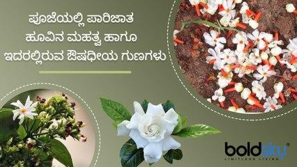 ಪಾರಿಜಾತ ಹೂವಿನ ಮಹತ್ವ, ಔಷಧೀಯ ಗುಣಗಳು | Parijat Flower Benefits And Medicinal Uses | Boldsky Kannada