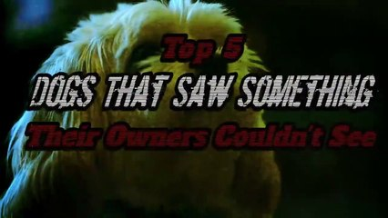 5 Dogs That Saw Something Their Owners Couldn't See  - Ghosts, ESP, & Paranormal
