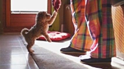 Quel chien choisir selon votre signe astrologique ?