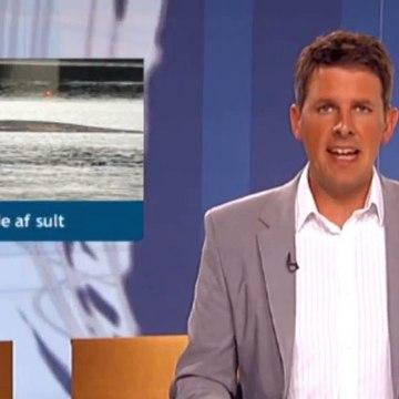 Hvalen døde af sult | Finhvalen | Vejle | 19-07-2010 | TV SYD @ TV2 Danmark