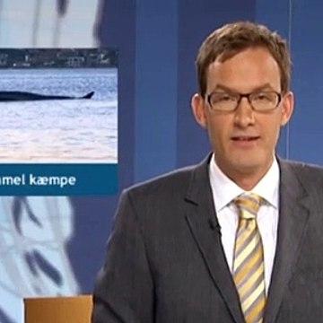 En gammel kæmpe | Finhvalen | Vejle | 28-10-2010 | TV SYD @ TV2 Danmark