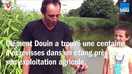 Près de Vitré, il découvre une centaine d'écrevisses à proximité de son étang