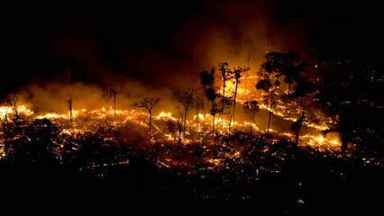 Hơn 1 nghìn đám cháy mỗi ngày tại rừng Amazon   VTC