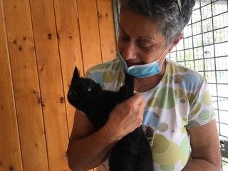 Journée internationale du chat noir : mille et une raisons d'en adopter un !