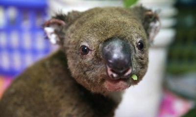Almost 3 billion animals affected by Australian bushfires – video report
