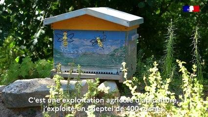 Un produit, un territoire : Tout sur le miel du Gâtinais