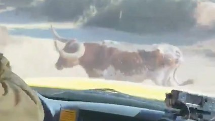 Bull chases away firefighters battling Lake Fire