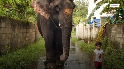 الهند: طفلة وفيل وصداقة غير تقليدية !!!