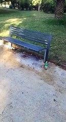 Andria: bottiglie di birra abbandonate nella villa comunale