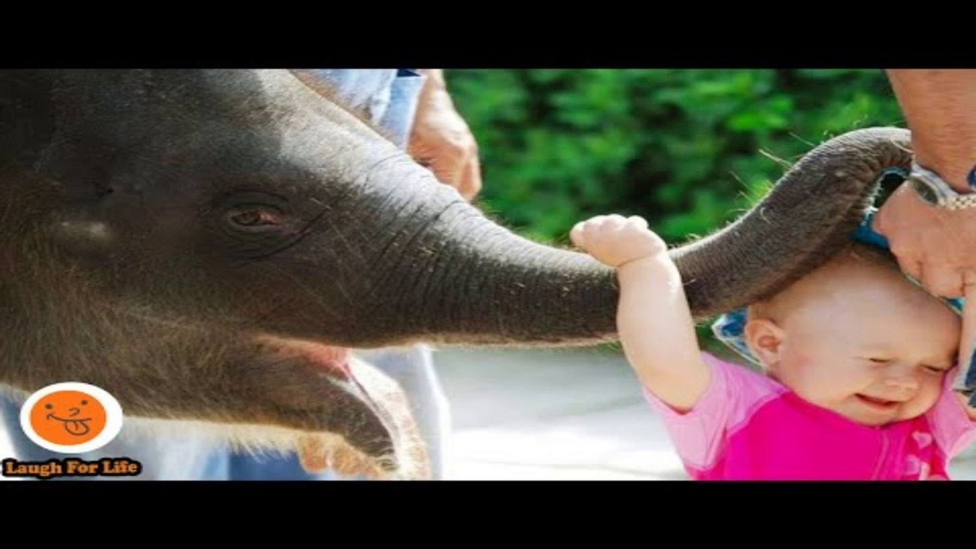 Funniest Kid Annoying Animals At The Zoo Funny Babies And Pets